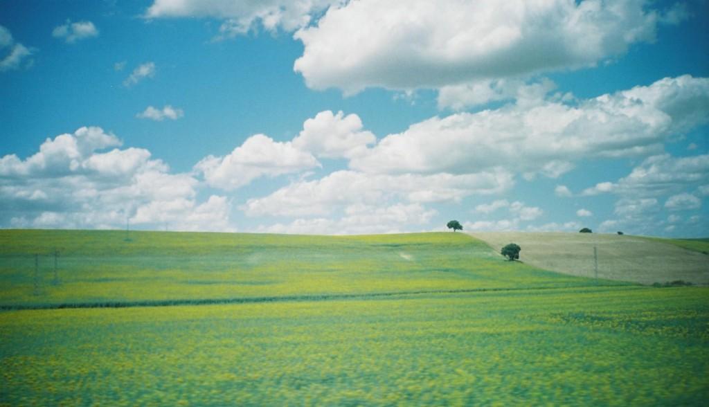 春の日のスペインのひまわり畑