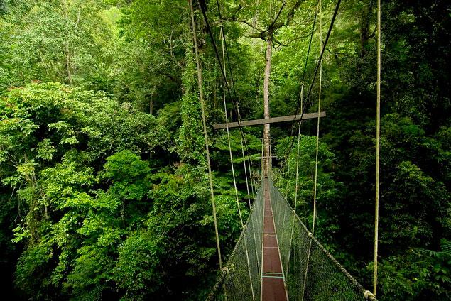 グヌン•ムル国立公園内の長い橋の風景