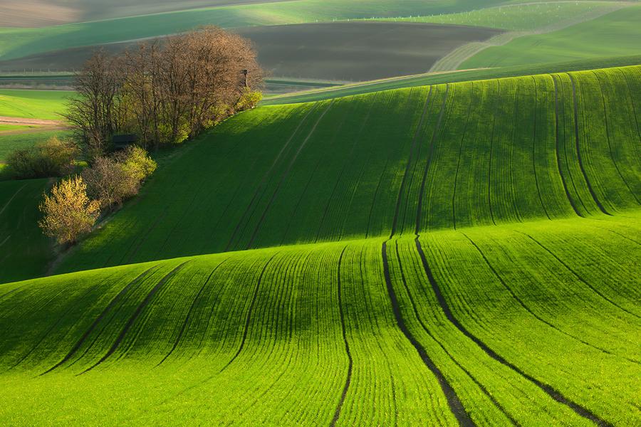 緑の絨毯のようなモラビアの大草原