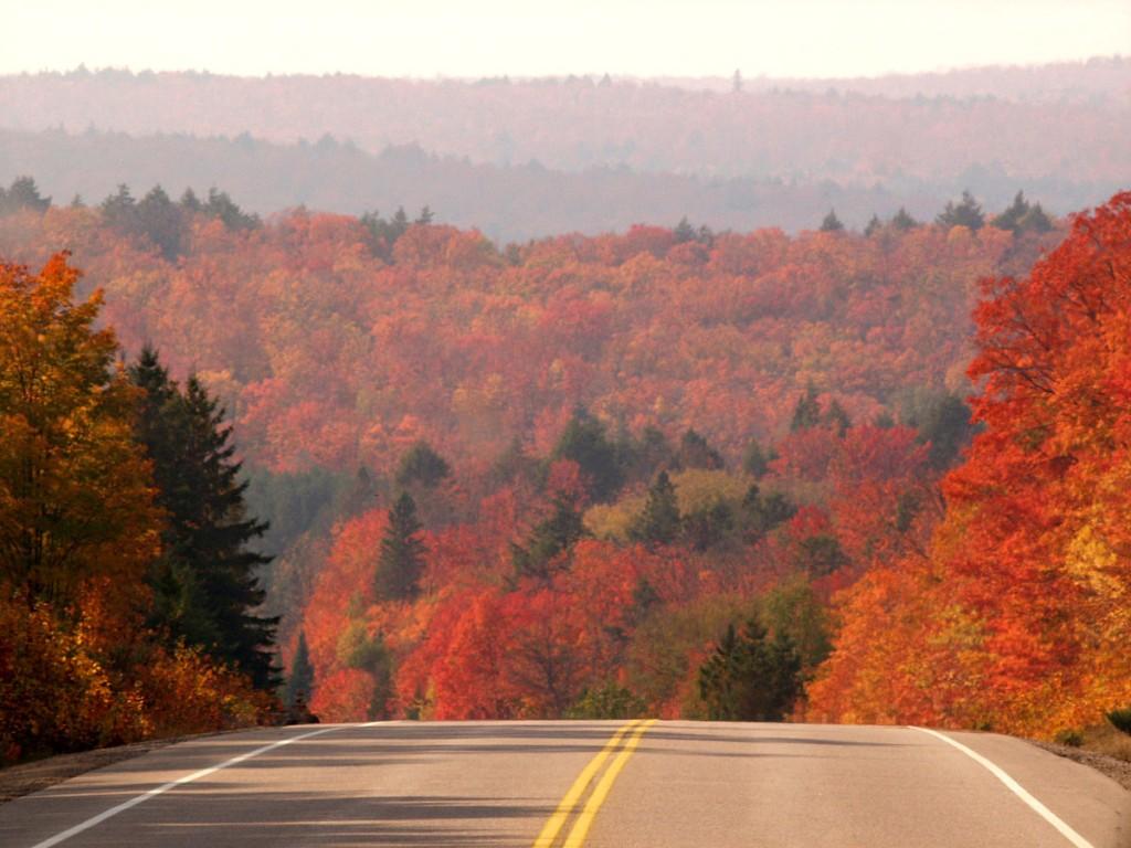 坂道手前のメープル街道と紅葉した木々の風景
