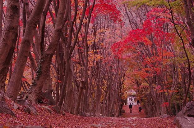 河内藤園の秋の園内