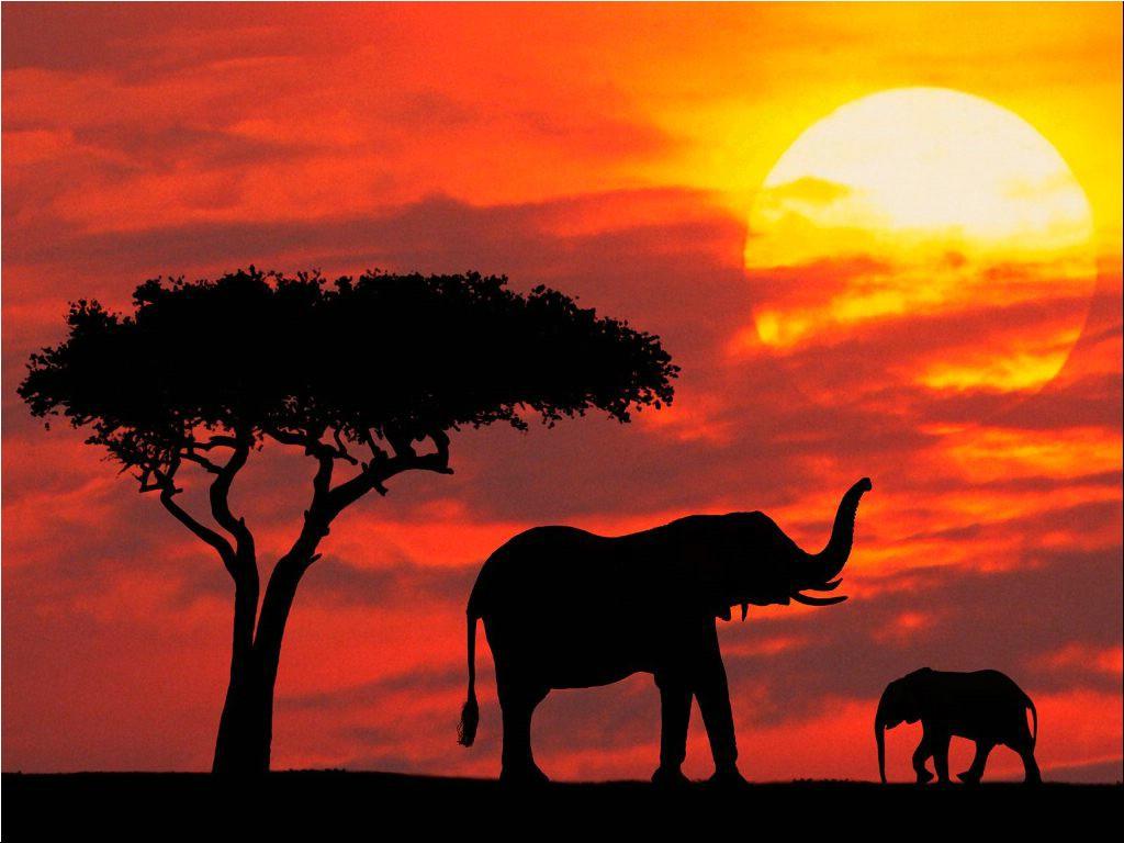 マサイマラ国立保護区の夕焼けに照らされるゾウの家族