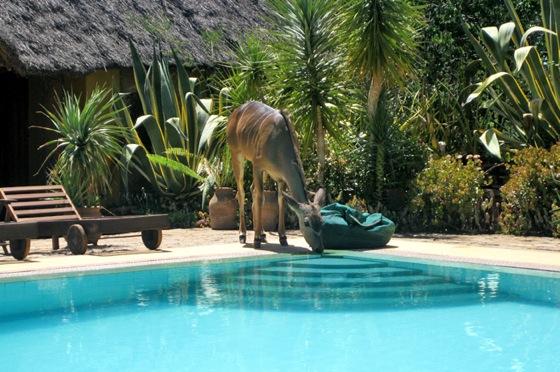ロイサバホテルのプールの水を飲みにきた野生動物