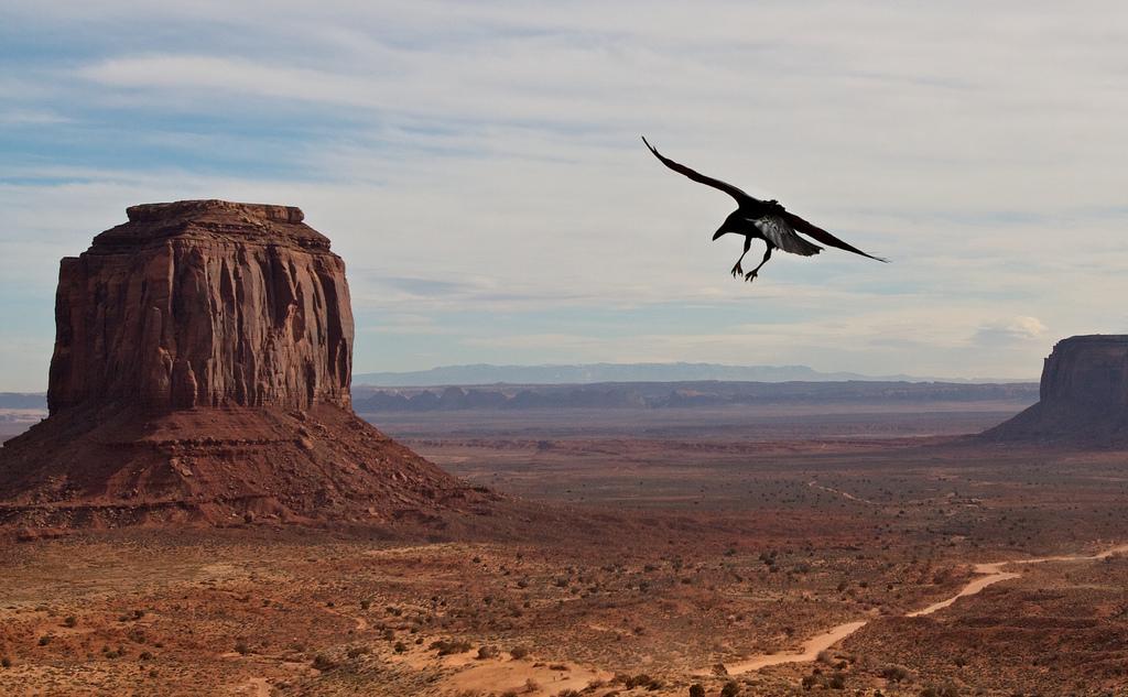 モニュメントバレーと周辺を飛び回る鳥