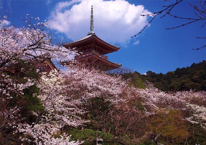 日本人必見!日本に生まれたなら行きたい京都の桜名所5選