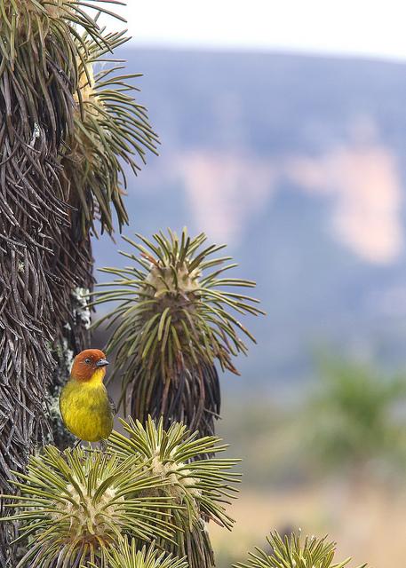カナイマ国立公園に生息する鳥の風景