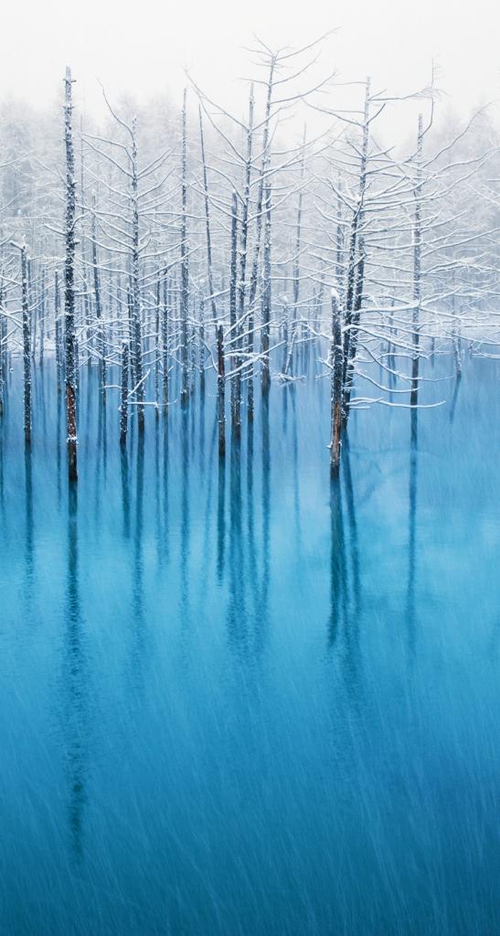 iOS7の壁紙に採用された美瑛の青い池の風景