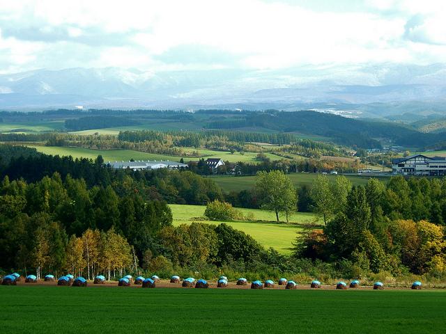 【北海道】美しい丘と花々が迎える大自然感じる大地「美瑛」
