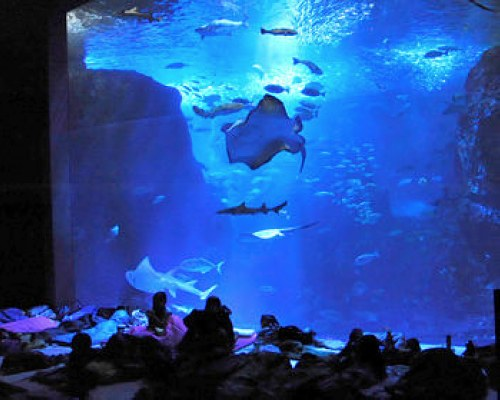 水族館に泊まっちゃう!?新江ノ島水族館の「ナイトアクアリウム」の夜の水族館がとても素敵