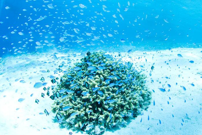 世界が恋する沖縄の慶良間諸島の「ケラマブルー」の海が美しすぎる!