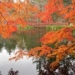 秋はもう、すぐそこに!アウトレットだけじゃない、魅力あふれる「軽井沢」の紅葉