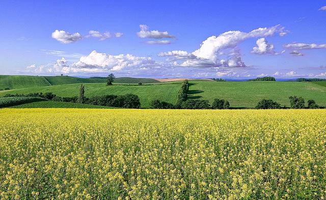 8月が見頃!視界一面に広がる花畑を楽しむ旅へ【北海道編】
