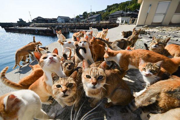 住民を圧倒するネコ?ネコの楽園「青島」は猫まみれのモフモフ天国