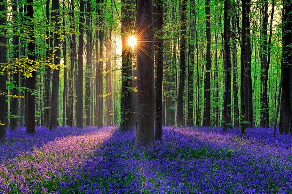 さぁ、あなたもおとぎ話の世界へ!幻想的なベルギーの森「ハレルボス」