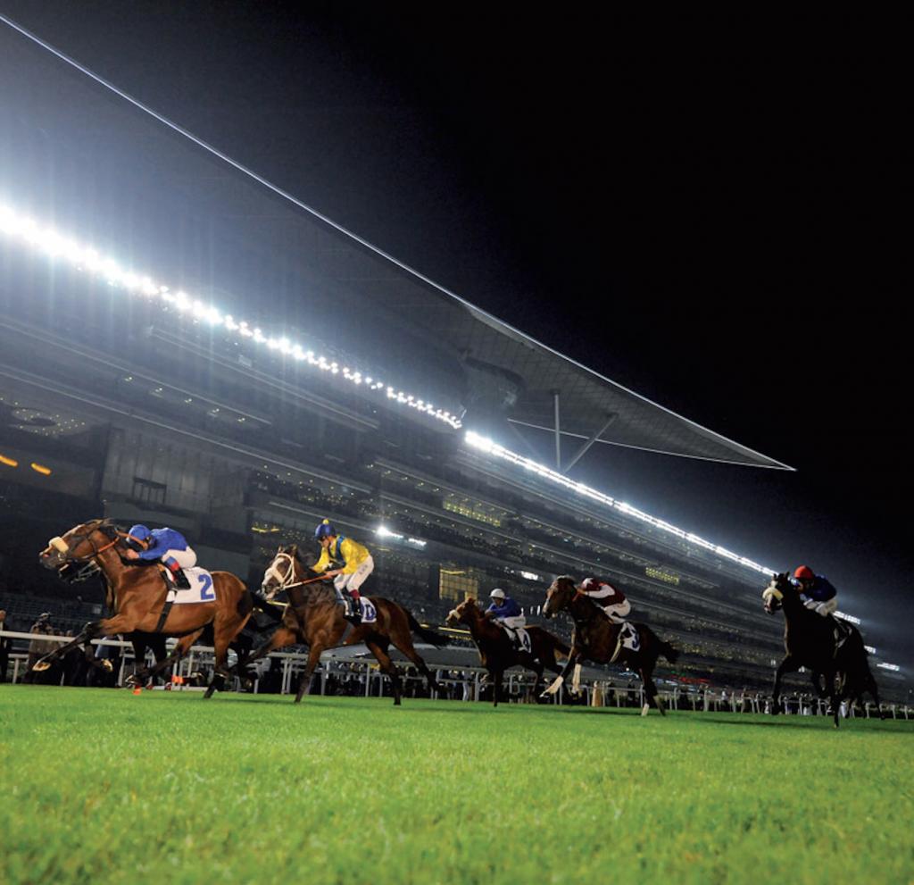 ザ・メイダン・ホテルに隣接するメイダン競馬場を走る競走馬