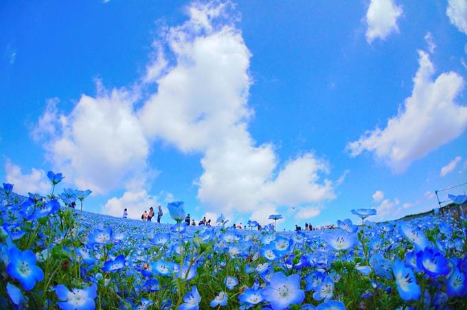 日本の春を楽しもう!これから訪れたい全国の「お花畑スポット」6選
