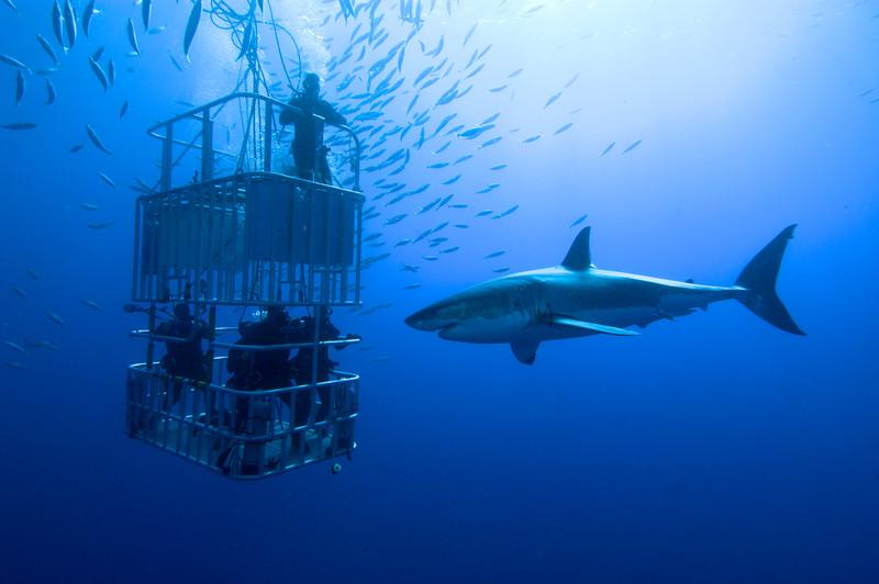 前世は魚だった貴方へ。驚くべき水中世界の絶景を楽しめるスポット5選