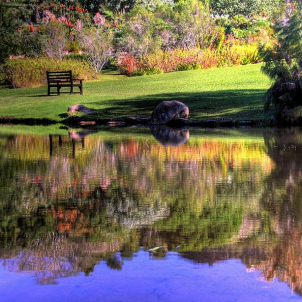 Kirstenbosch_reflections_by_Day_is_Coming-602x602