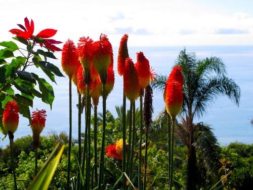 花に彩られた大西洋の真珠と言われる美しき島「マデイラ諸島」