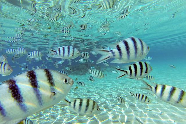 アイツタキ島の魚