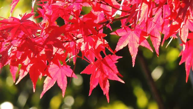 好評により今年も開催!紅葉美しい皇居の並木道「乾通り」秋の一般公開