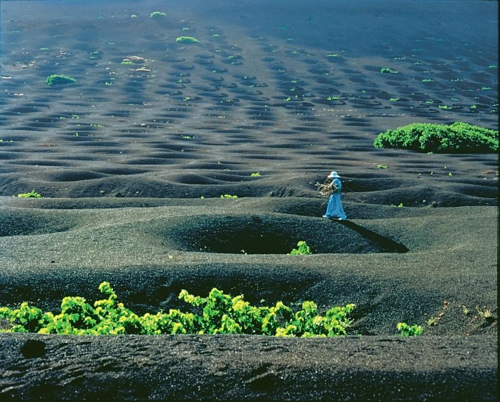 ランサローテ島のワイン畑