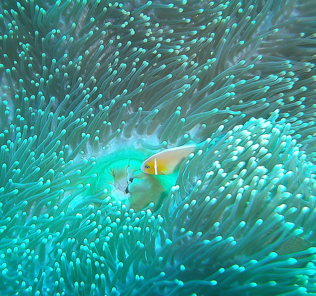ロックアイランドに生息する熱帯魚