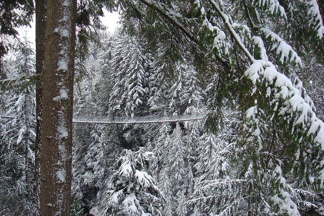 キャピラノの吊り橋の横から見た風景