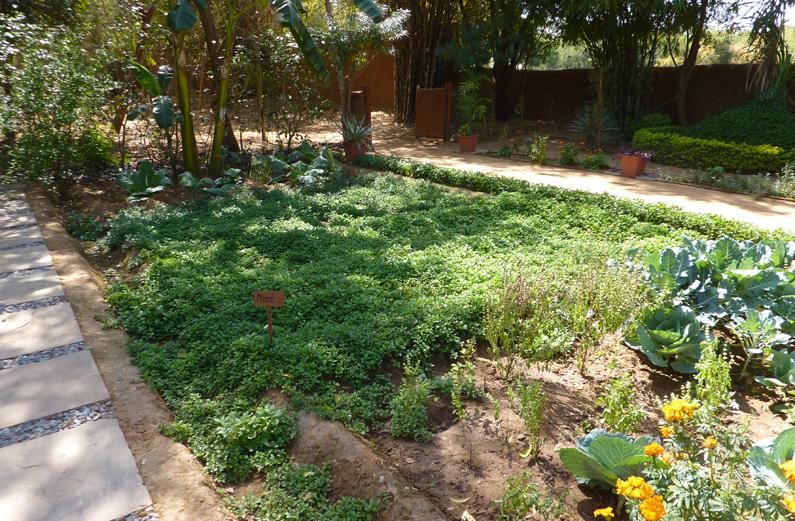 アマニカス ガーデン