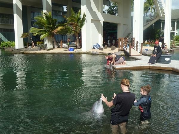 イルカと遊べるラグーン