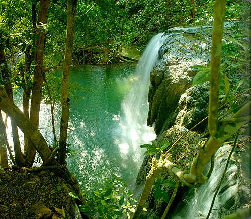 モヨ島の自然