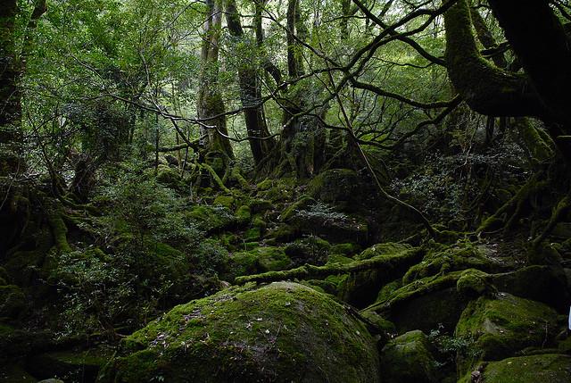 もののけ姫の森のような白谷雲水峡の風景