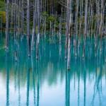 【世界に認められた絶景】北海道が誇る幻想的すぎる「美瑛の青い池」
