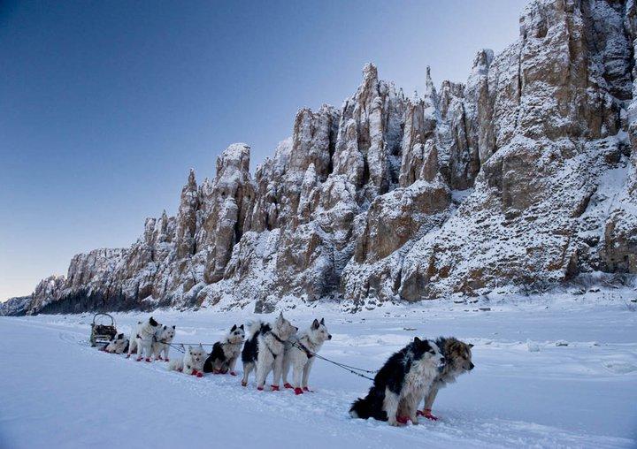 雪積もるレナ石柱自然公園でソリを引く犬達