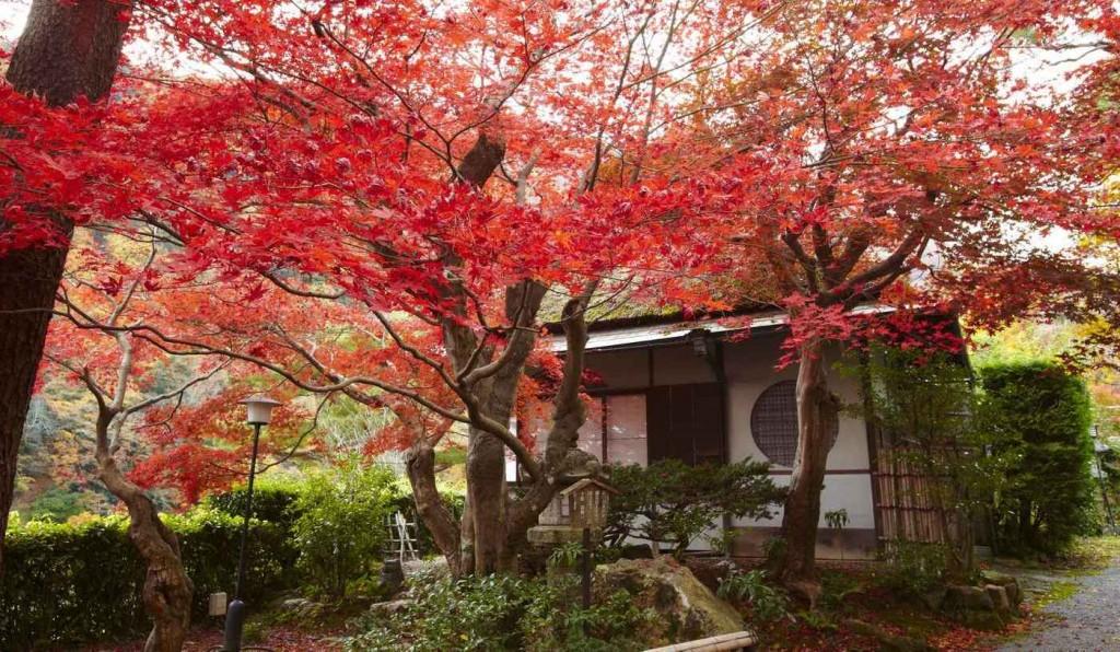 翠嵐 ラグジュアリーコレクションホテル 京都の風景