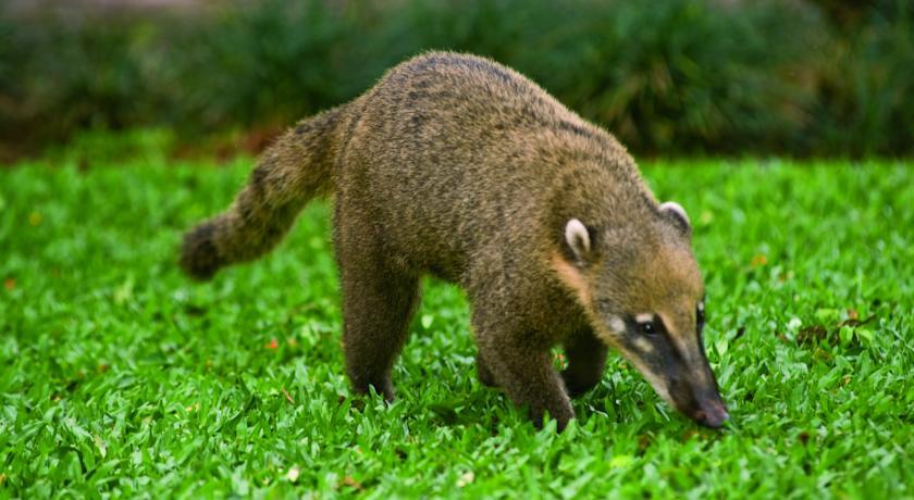 ベルモンド・ホテル・ダス・カタラタス Belmond Hotel das Cataratasで出会える野生動物