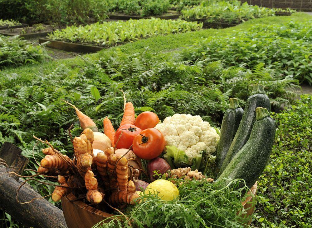 ザ・ファーム・アット・サン・ベニート The Farm at San Benitoの農園と野菜