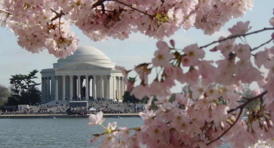 ワシントンD.C. Washington D.C.の桜