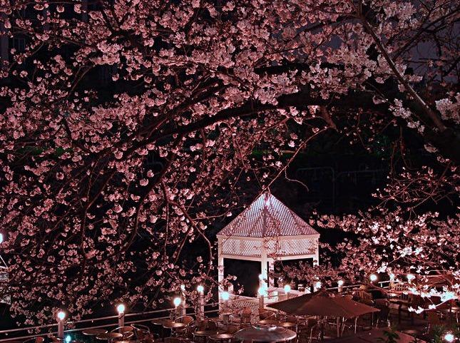CANAL CAFE(カナルカフェ)と夜桜