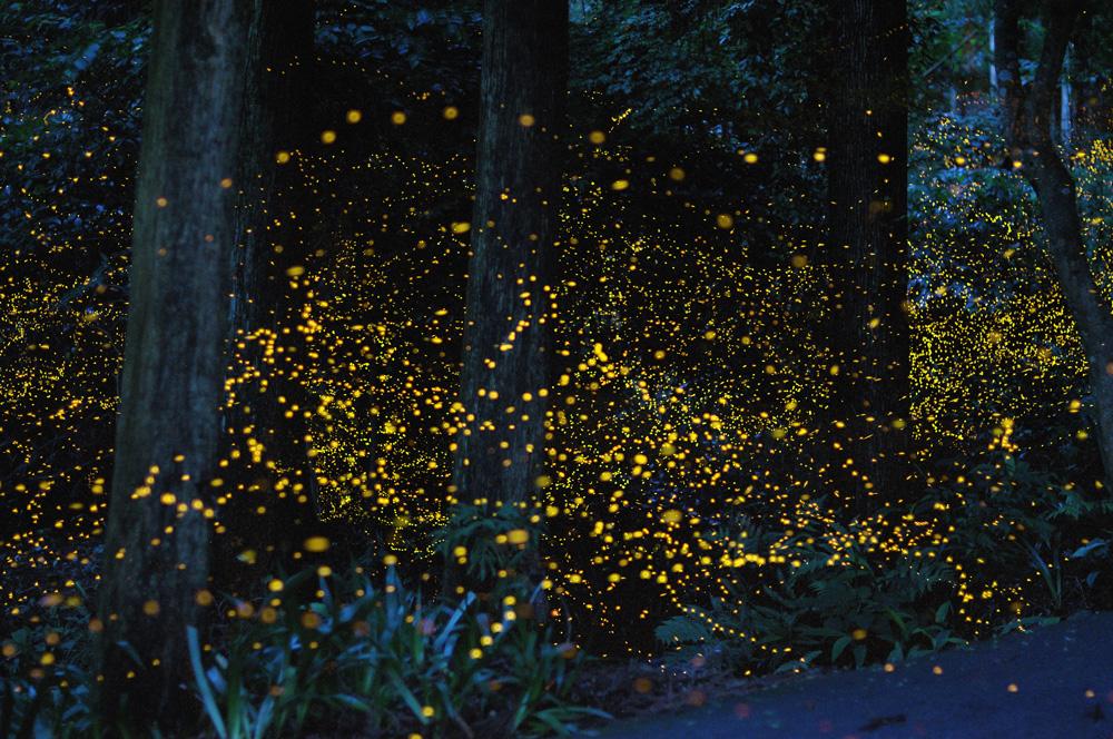 世界も認めた絶景。幻想的な美しさを魅せる岡山県天王八幡神社の「キンボタル」