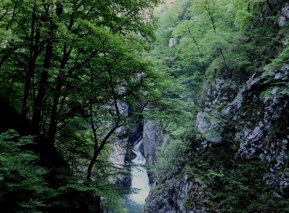 シュコツィアン洞窟群の森林