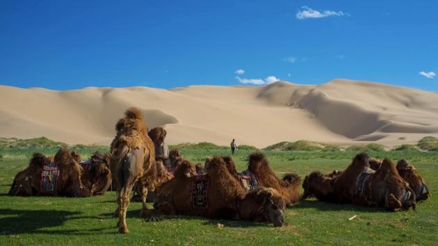 ゴビ砂漠4