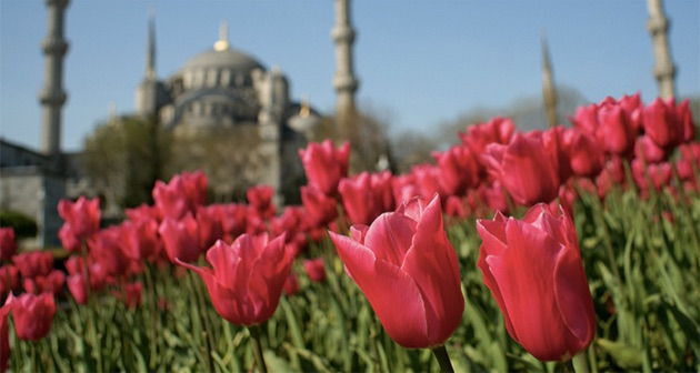 イスタンブール中がカラフルに彩られる絶景チューリップ祭り「イスタンブール・ラーレ・フェスティバル」