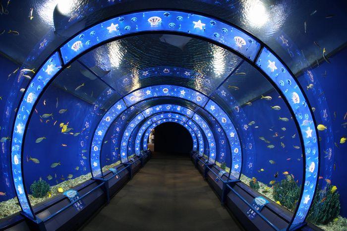 デートスポット特集「海遊館」