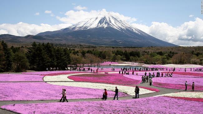 富士芝桜まつり/山梨