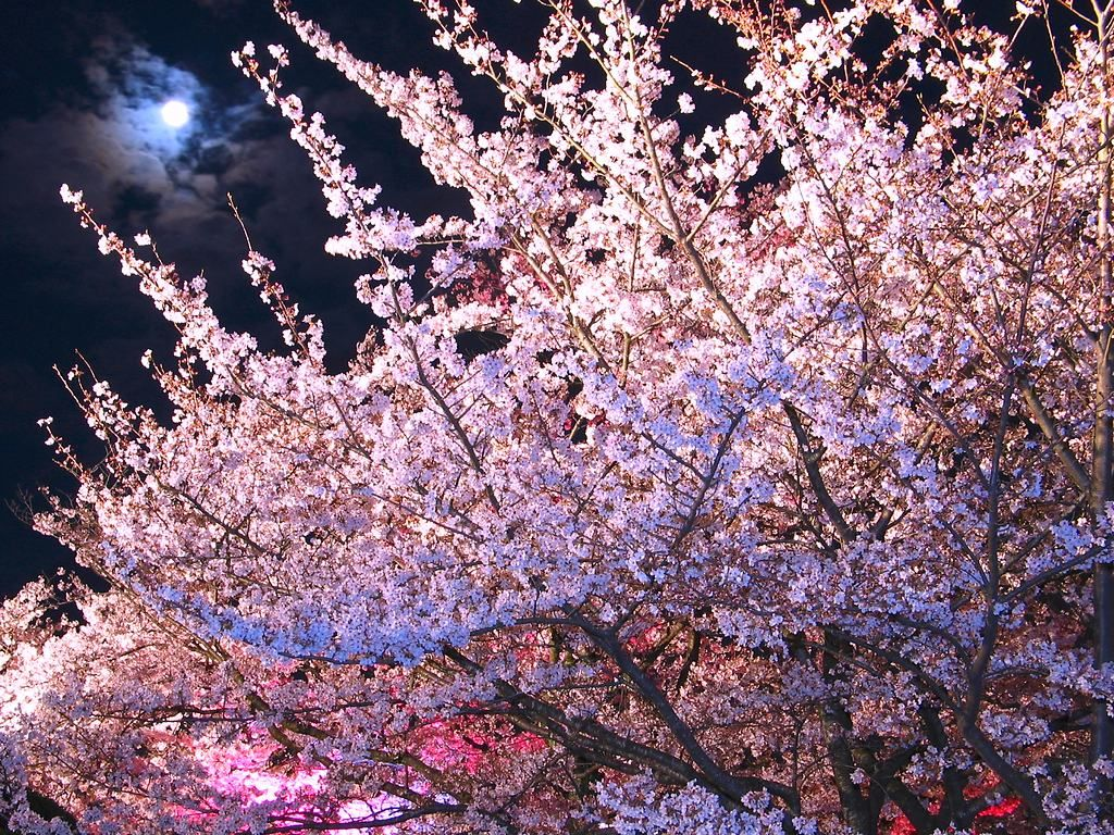 次回は17年後!4月4日は皆既月食とのコラボお花見で春を満喫しよう