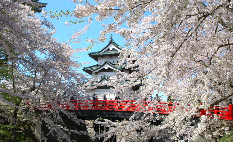4月中旬以降に楽しめる!東北のおすすめ桜名所5選