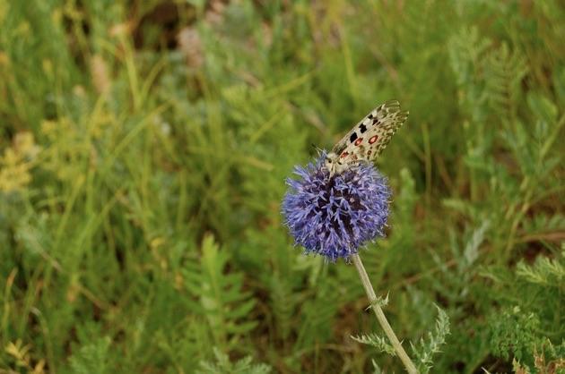 テレルジ国立公園の花