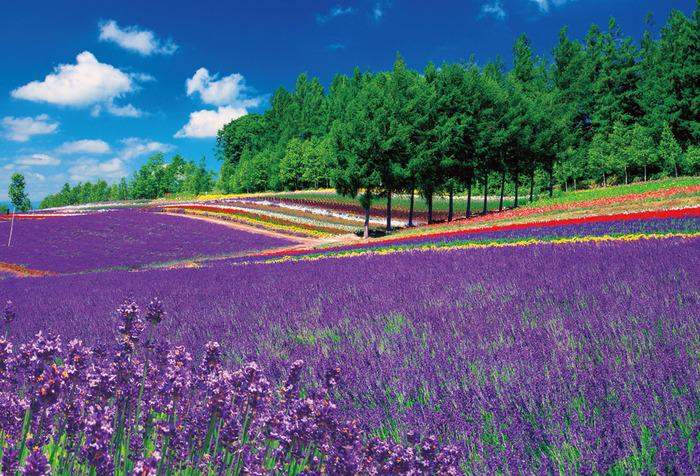 これからの季節に楽しめる!初夏の花見スポット10選