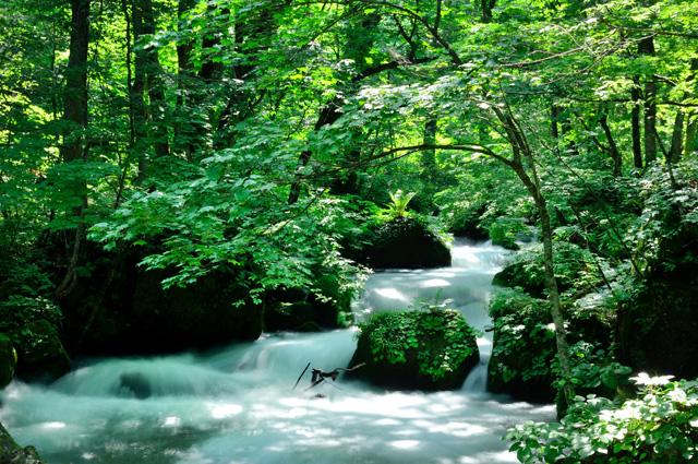 大自然と四季を感じる日本の絶景「青森県・奥入瀬渓流」